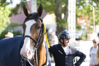 Ulyss Morinda, noticed by German equine websites