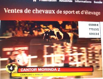 Cantor Morinda Z, 3 ans, adjugé 65.000 Euros aux ventes Fences Elite, le 29/08/2017